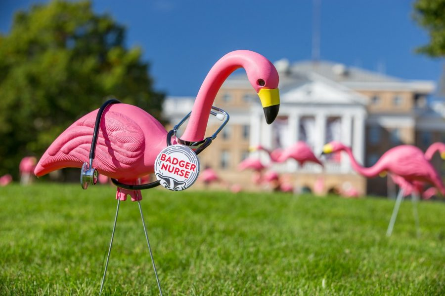flamingo wearing a Badger Nurse pin